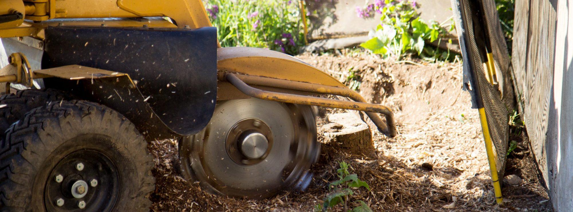 arborEx Baumstumpfbeseitigung